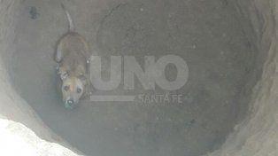 Imperdible video: así rescataron a un perro de un profundo pozo en el norte de la ciudad