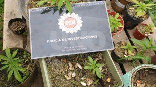 La policía buscaba armas pero encontraron dinero y plantines de marihuana