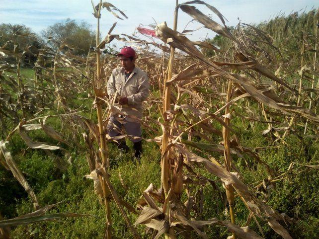 Situación. Todas las familias que integran el consorcio de La Verdecita es dueña de las tierras que trabajan.