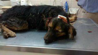 El animal falleció en la veterinaria