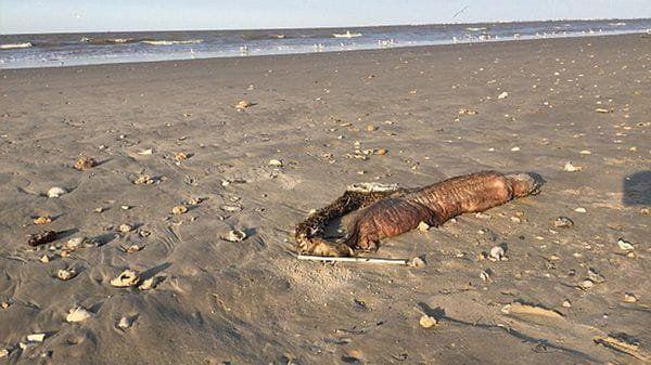 La monstruosa criatura que apareció tras el paso del huracán Harvey