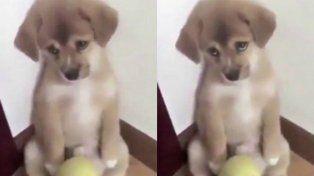 El castigo a un cachorrito que conmueve a todos