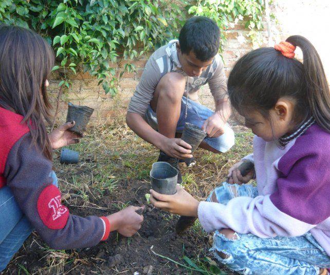 Producción. Aprenden los conocimientos básicos y además producen los plantines.