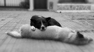 No se movió. El perro callejero se quedó custodiando a la perra muerta.
