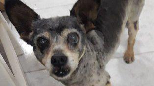 La increíble historia de la familia santafesina que buscó cuatro años a su mascota