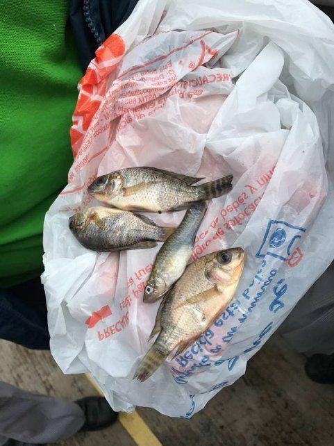 Una lluvia de peces sorprende a una localidad en el norte de México