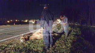Uno de los caballos muertos luego de ser embestido por el colectivo.