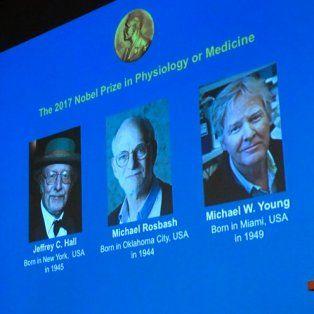 hallazgos sobre el reloj biologico ganan nobel de medicina