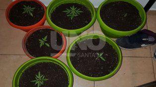 Santo Tomé: denunció a su hijo por llegar a su casa con 11 plantas de marihuana