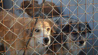 Inauguran un nuevo refugio para perros en Sauce Viejo