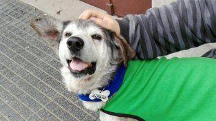 Inédito: vecinos se organizaron por WhatsApp para cuidar a un perro sin dientes de barrio Constituyentes