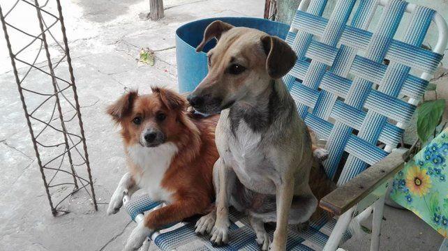 La imagen de Cholita y Becky fue compartida por Caro.