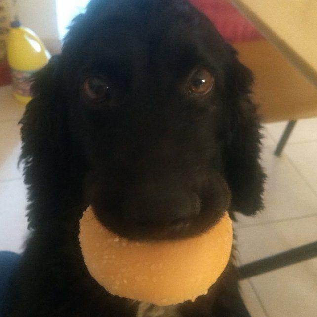 Doki es el perro de Jesi.