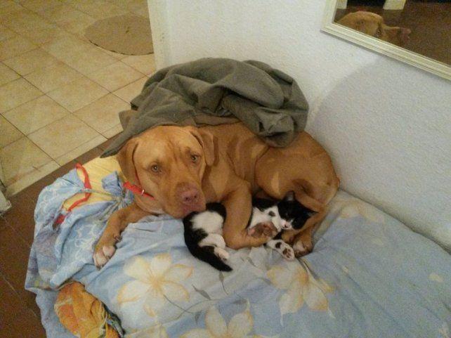 Kelsy y Perseo. Las mascotas de Mari.