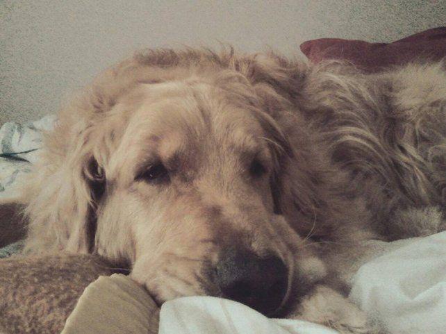 María Laura mandó esta foto de Lola.