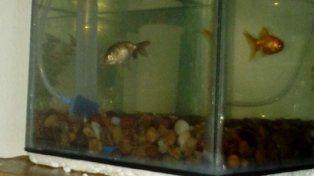 Acá los peces de Jesica.