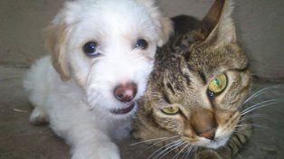 Los amigos de Celia: su perro Budy y el gato Pepe.