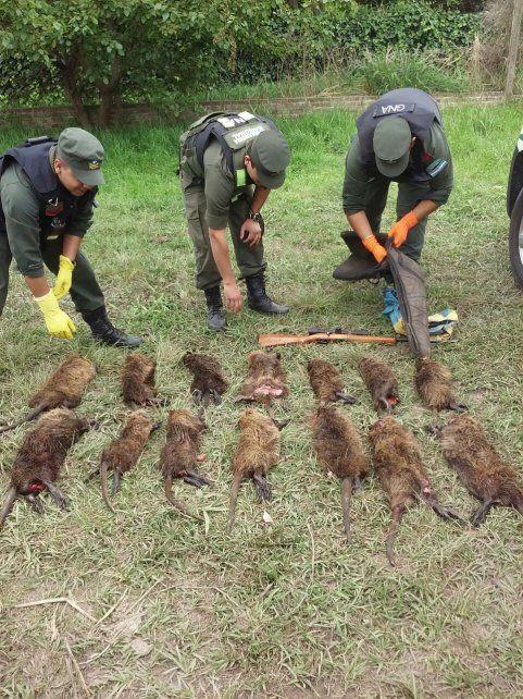 Sauce Viejo: le quitaron una carabina y las 14 nutrias sin vida que llevaba