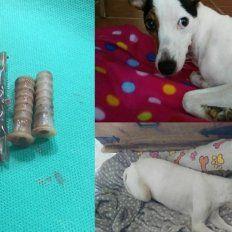Salvaron a una perra a la que le habían metido objetos en la vagina