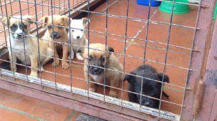 Un nuevo té bingo para colaborar con los 800 perros de la Protectora de Animales