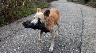 Una perra rescató el cuerpo calcinado de su cachorro en un incendio