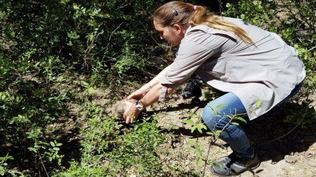 Liberaron 28 tortugas entregadas voluntariamente por particulares que las tenían como mascotas