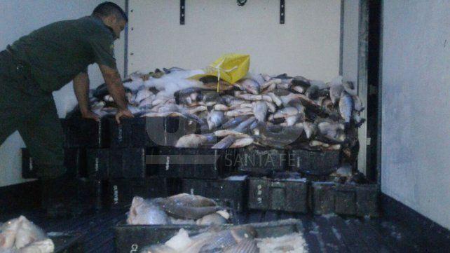 Depredación ictícola: secuestraron un camión con 4 toneladas y media de sábalos fuera de medida