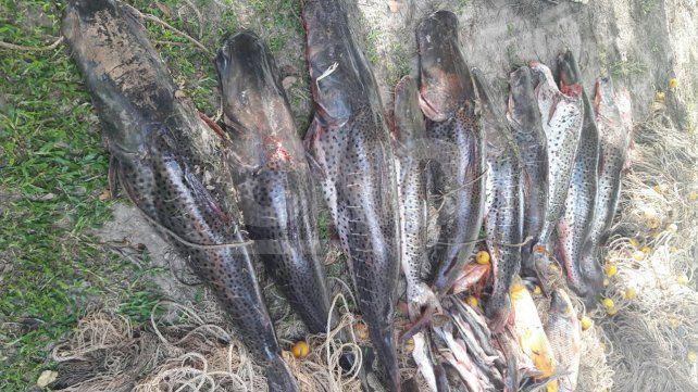 Rige la veda para la pesca de surubí en toda la provincia