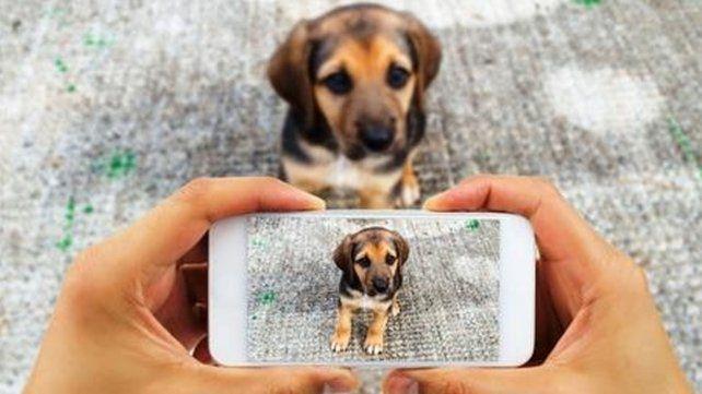 Impulsan la creación de una aplicación para usar en caso de pérdida o hallazgo de mascotas
