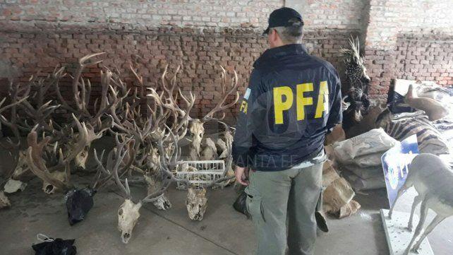 Secuestran 450 animales disecados y congelados en Santa Fe