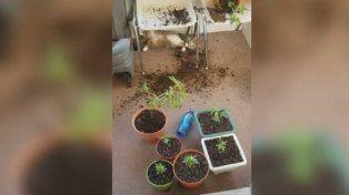 VIDEO: así quedaron estos gatitos después de comer la marihuana de su dueña