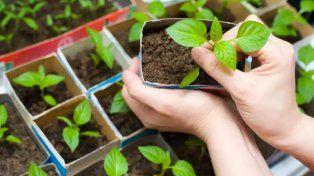 Una huerta sustentable para la escuela Cristo Obrero
