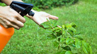 Prohíben la venta y el uso de un insecticida probablemente cancerígeno