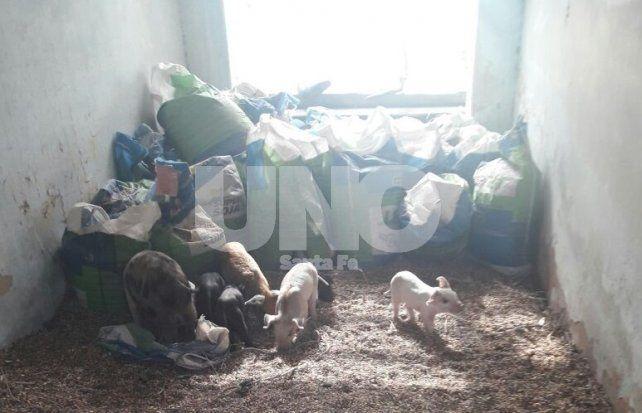 Múltiples allanamientos en San Genaro terminaron con cinco personas detenidas por abigeato