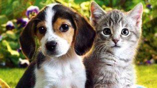 Quién es más inteligente: ¿el gato o el perro?