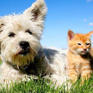 quien es mas inteligente: ¿el gato o el perro?