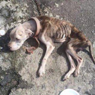 una pareja queria dejarlo morir atado, sin agua ni comida