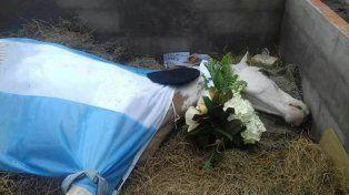 Video: tristeza e indignación por la muerte de un caballo en una fiesta de doma