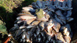Secuestraron 900 sábalos fuera de medida a un pescador en el paraje El Toro