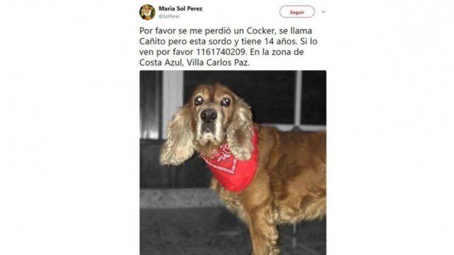 El momento de desesperación de Sol Pérez por su perrito