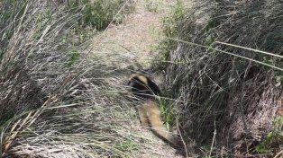 La provincia liberó un oso melero en su hábitat