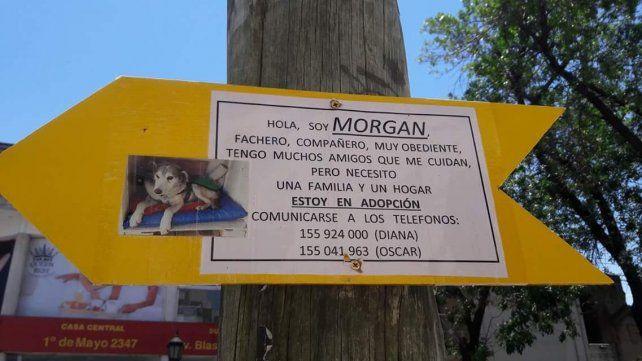 Una familia adoptó a Morgan, el perro callejero de barrio Constituyentes