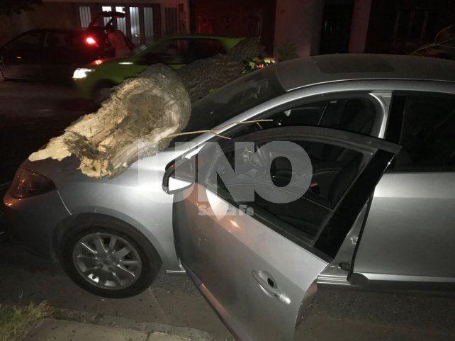 Una pesada rama cayó sobre dos autos en barrio Constituyentes