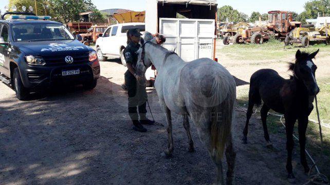 Recuperaron caballos que fueron robados en el departamento Las Colonias