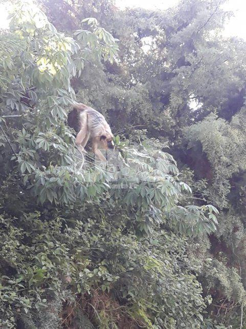 Un mono carayá sorprendió a los vecinos de Villa California