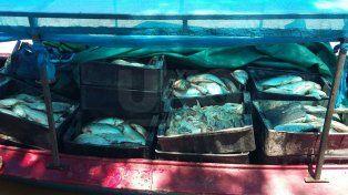 Secuestraron más de 3000 pescados en distintos parajes de Arroyo Leyes