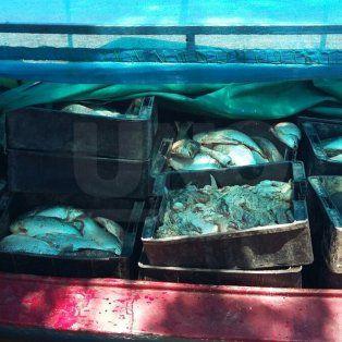 secuestraron mas de 3000 pescados en distintos parajes de arroyo leyes
