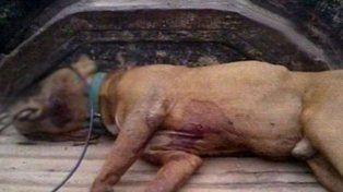 El perro del vecino le mató el caniche y en venganza lo ahorcó