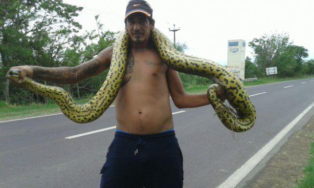 Encuentran una inmensa serpiente Curiyú camino a Puerto Reconquista