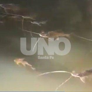 paren de fumigarnos pide acciones urgentes ante la mortandad de peces